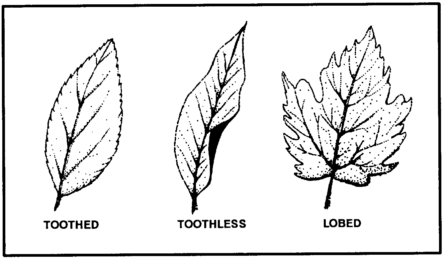 Basic Leaf Margins