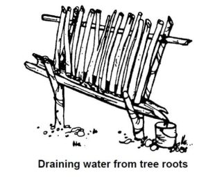 Where to find water in tree roots