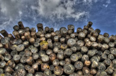 Large stack of logs