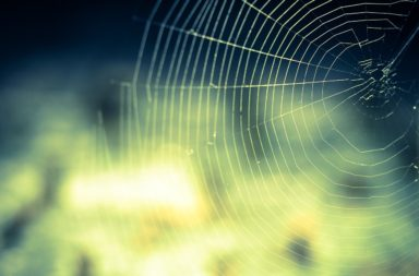 Spider web (abstract)