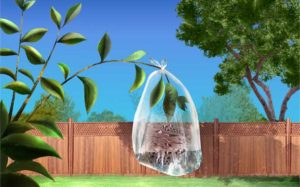 "Where to find water via the ""transpiration method"""