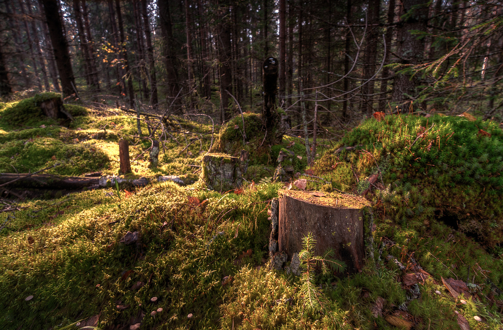 Survival Skills: 8 Best Uses for a Fallen Tree