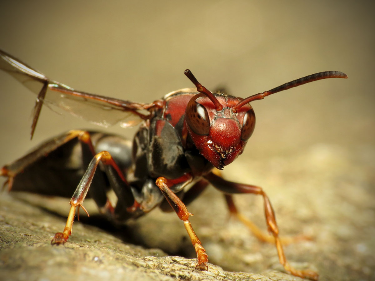 World's Most Painful Insect Stings, According to Science