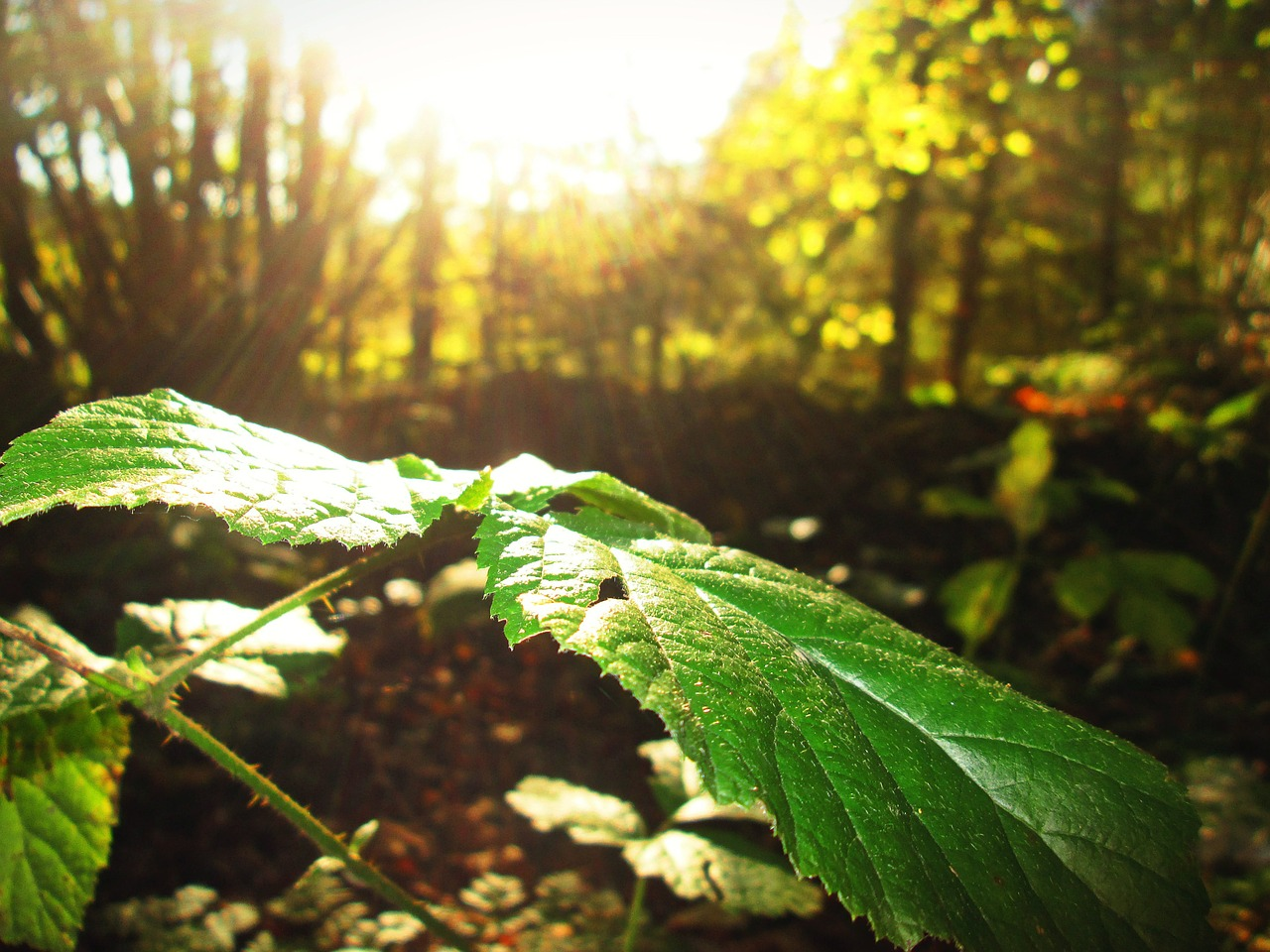 The Basics of Identifying Edible Plants for Survival